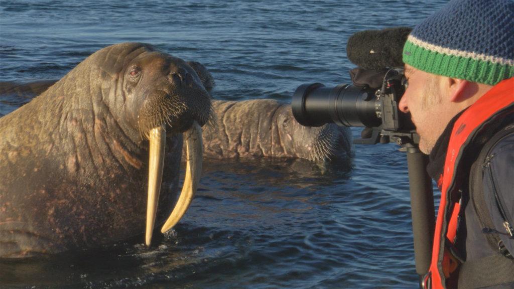 03 Spitzbergen - Auge in Auge mit dem Walross 300dpi